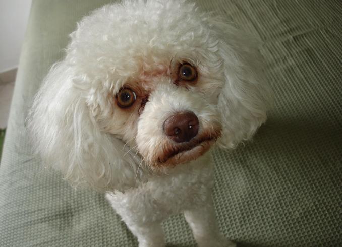 Раздраженная собака