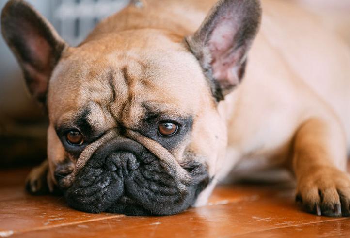 Слабость у собаки