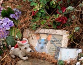 Как и где правильно похоронить собаку
