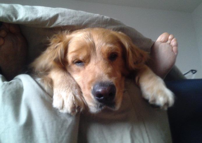 Песик спит в ногах