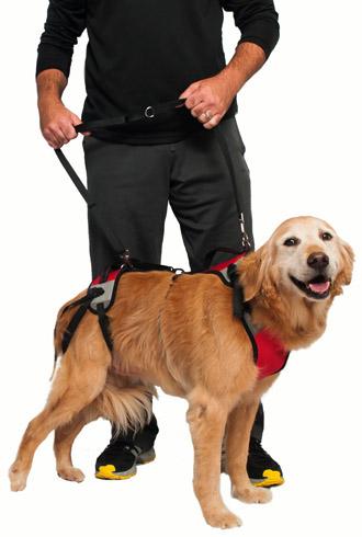 Шлейка и собака