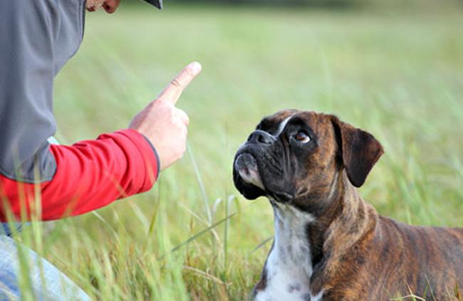 Тренировка с щенком
