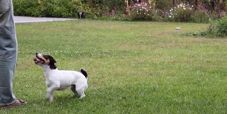 Тренировка с собакой