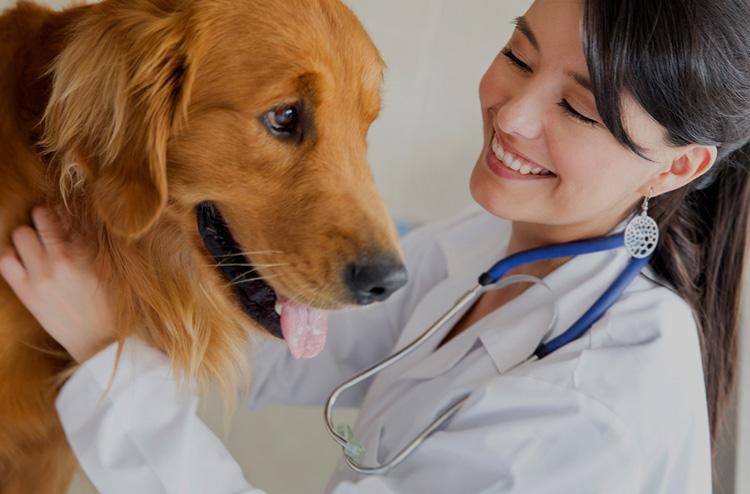 Ветеринар и пес
