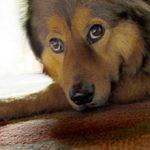 Радикулит у собак: причины, симптомы и лечение