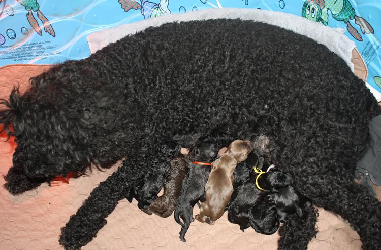 Мама с щенятами