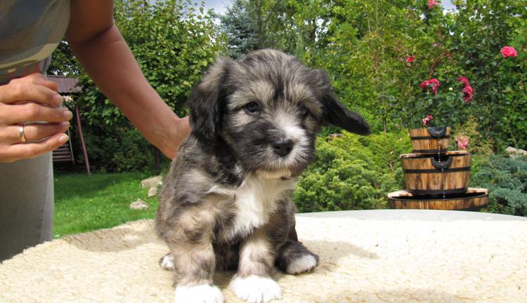 Красивый щенок