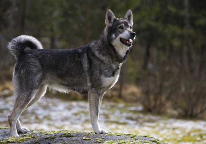 Красивый пес