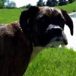 Если собака съела лягушку: что делать и нужно ли беспокоиться