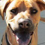 Если у собаки белый язык: причины и что делать