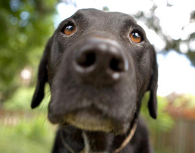 Как поднять собаке иммунитет