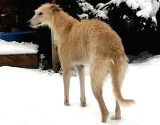 Собачка зимой