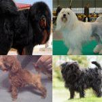 ТОП-10 самых дорогих пород собак в мире