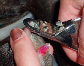 Как правильно подстричь собаке когти в домашних условиях